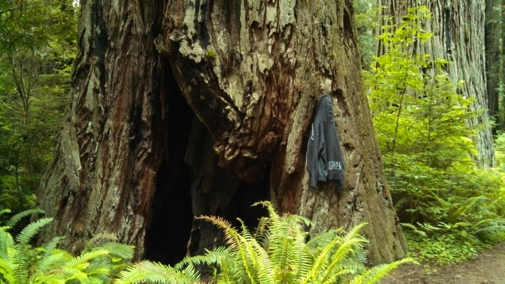 Redwoods are bigger than hoodies.