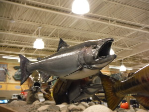 Salmon at Cabela's