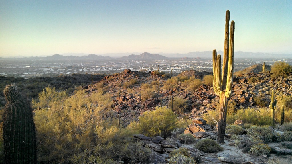 A saguaro at sunset in South Mountain